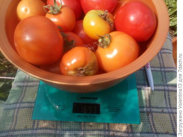 Вес помидоры N5