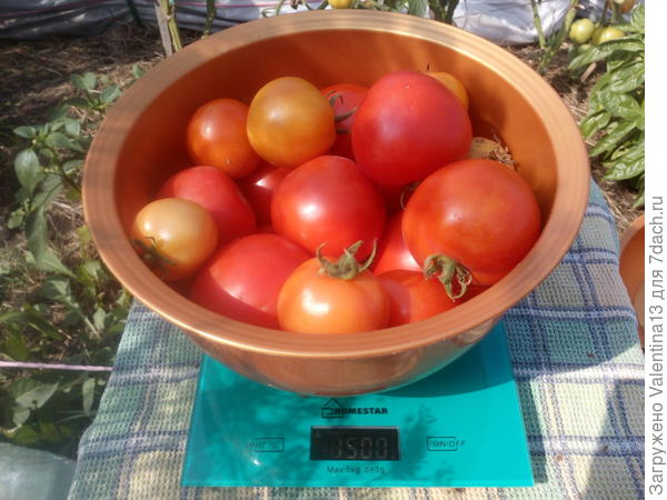 Вес помидоры N4