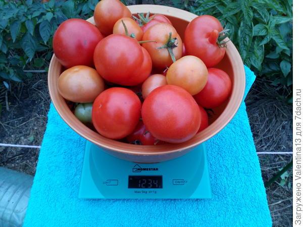 Вес первой тары с помидорами