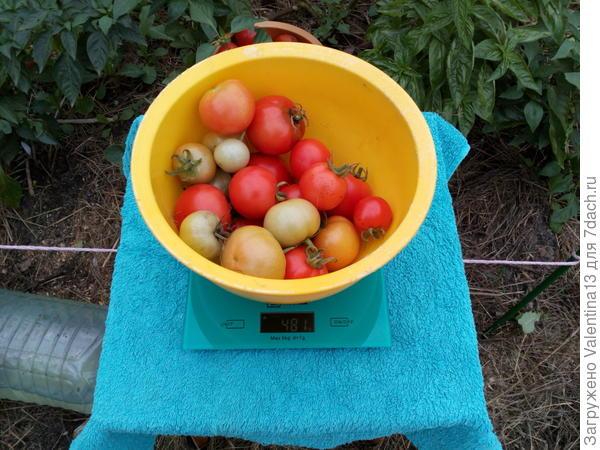 Вес второй тары с помидорами ЛюбашиN3
