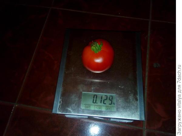 маленький томатик от Любаши 129 гр.