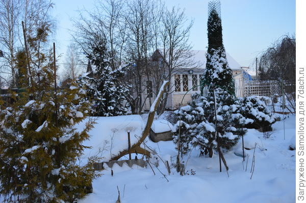 Сад в январе 2018