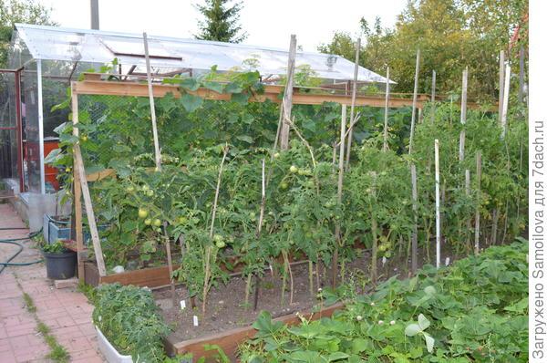 За помидорами грядка с огурцами