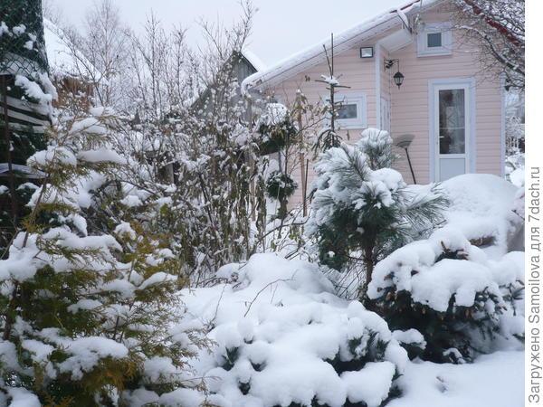 Спилберг зимой (в центре, слева от двери). Видно, что низ у него голый, это ветки обломились от тяжести снега.