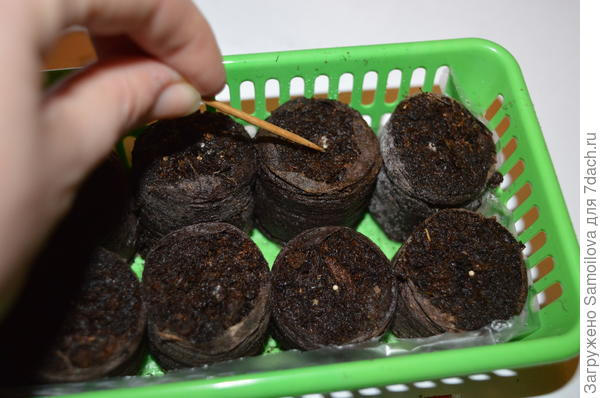 Посев петунии