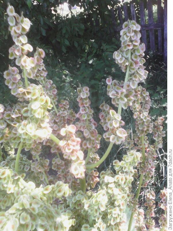 разный цвет растений