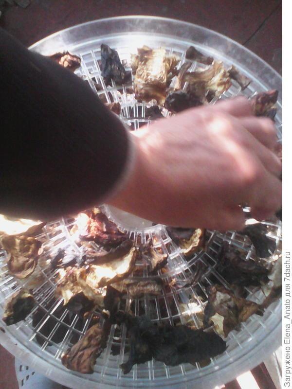 грибочки и видно размер дырок в поддоне