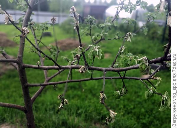 Ветка  с листиками