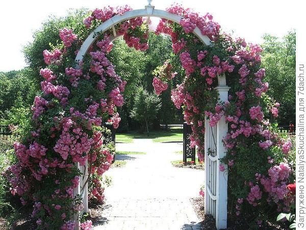 пергола есть, еще бы такие розы вырастить