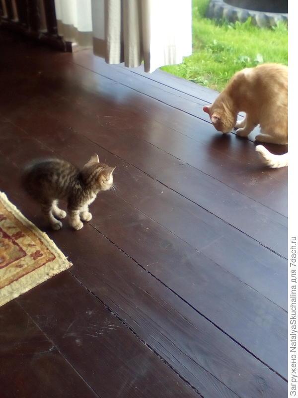 наши коты