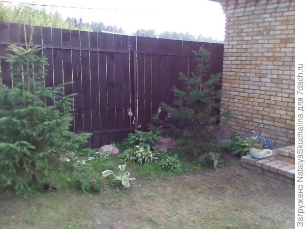 возле баньки посадила елочки и между ними несколько кустиков хост, примул, ландыши.