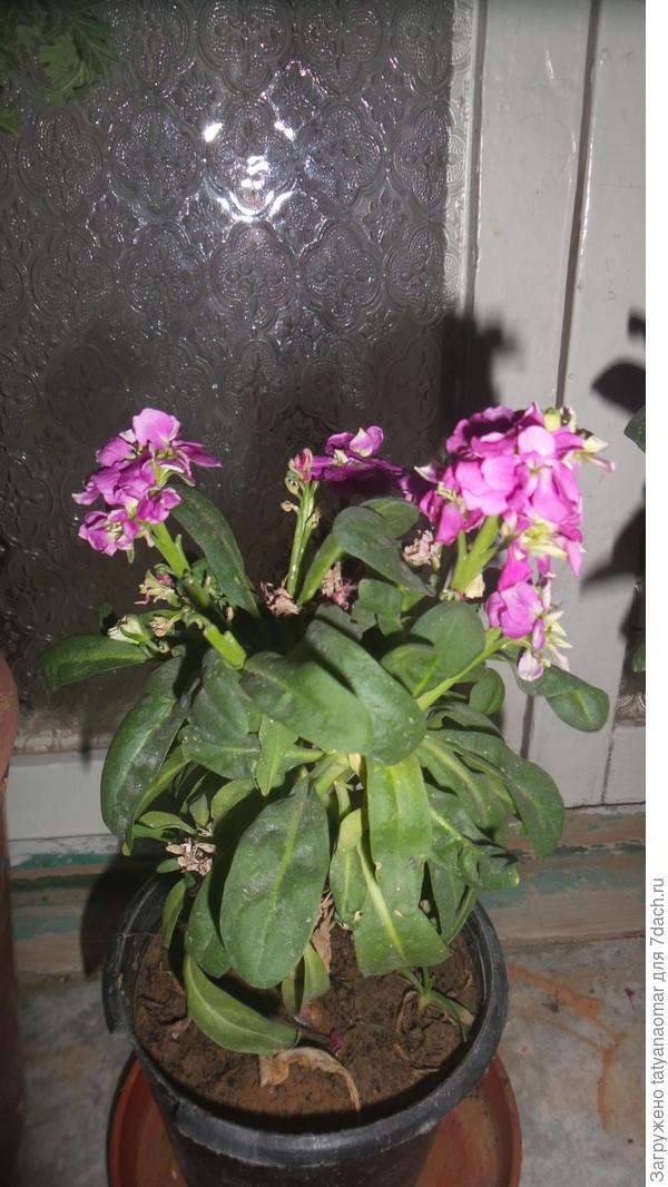 очень прошу, помогите определить, что это за растение