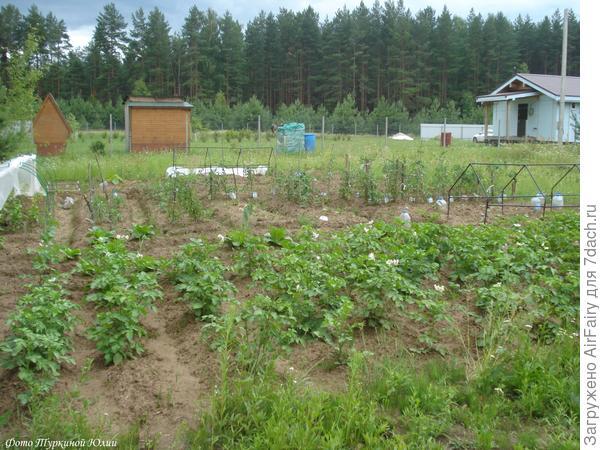 Мой огородик (спустя месяц после начала высадки рассады)