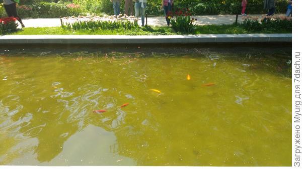 У прямоугольном бассейне плавают золотые рыбки
