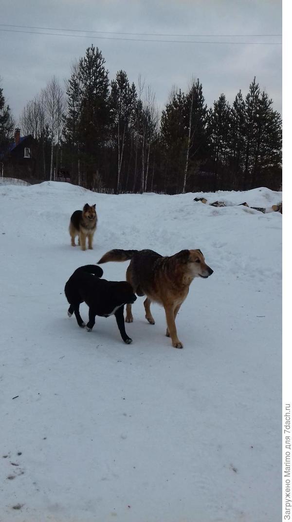 первыми встречают собаки