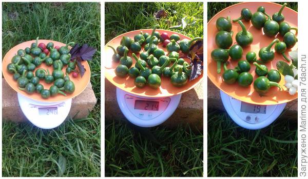 Перец острый Горячее сердце. Урожай - пошаговый рецепт приготовления с фото