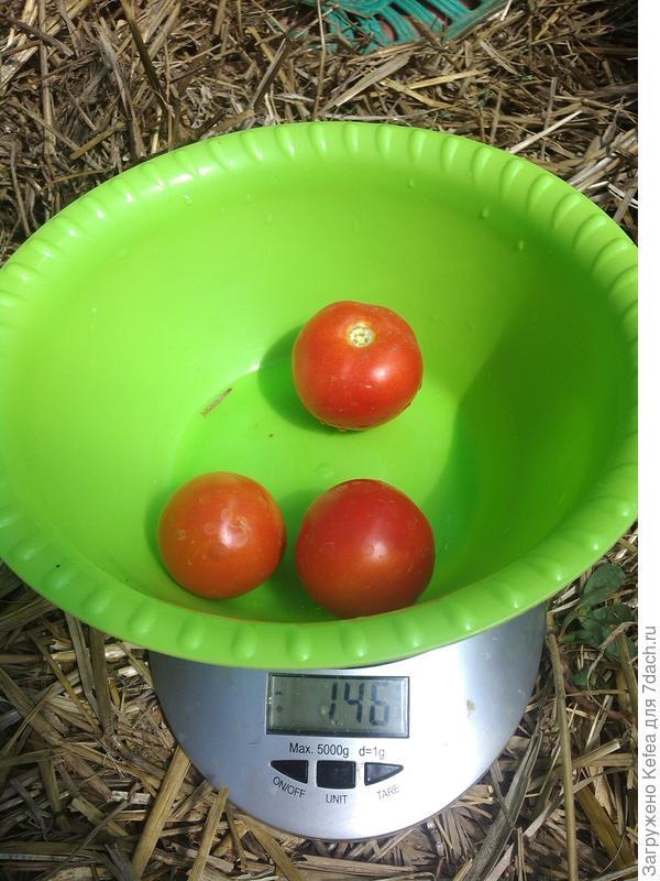 Вес плодов с куста №2