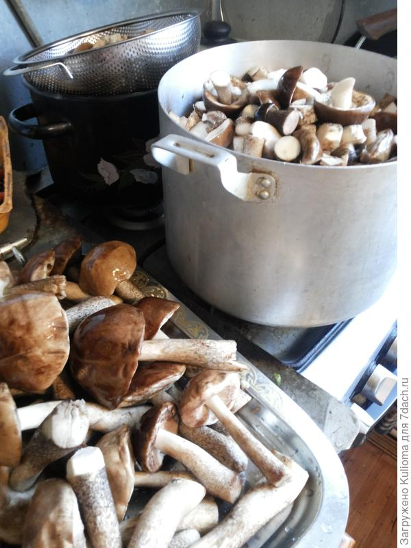 Непрерывный процесс мойки-варки грибов