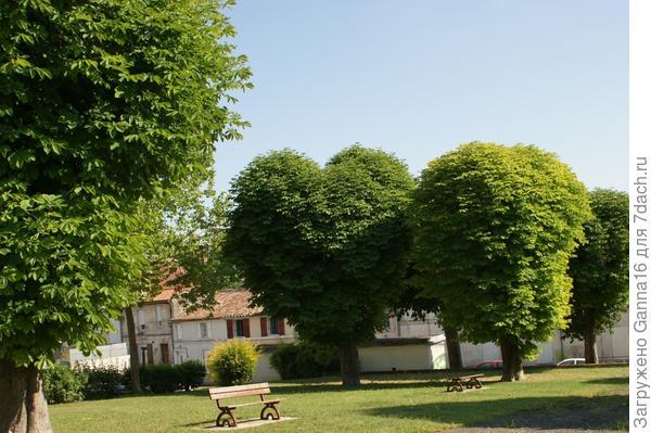 Сердечко ( дерево)