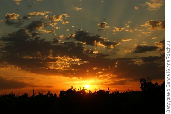 Закат над виноградником