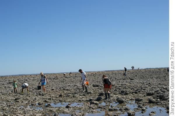 Сбор моллюсков