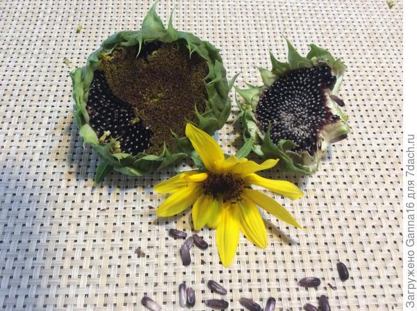 После цветения и семена