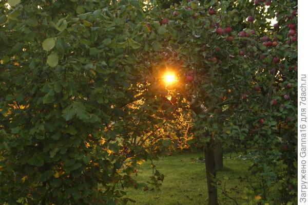Солнышко в яблоках