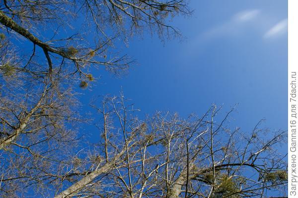 Большие - большие деревья