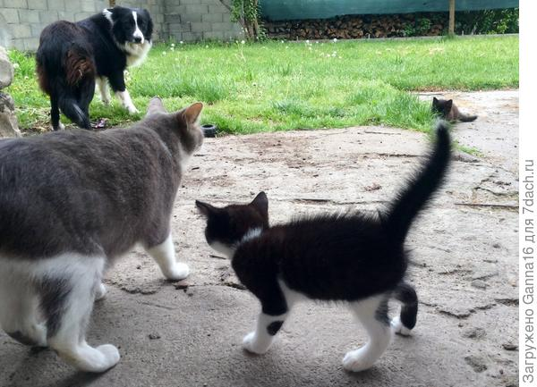 Хозяйка!  Меня коты обижают, прохода не дают!