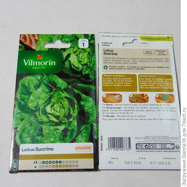 Сюкрин https://www.promessedefleurs.com/potager/graines-potageres/graines-de-salades/laitue-grasse-sucrine-vilmorin.html
