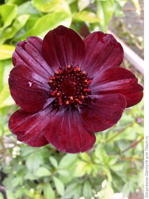 Первый цветок пятого июня