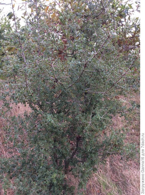 Экземпляр 2, дерево целиком.
