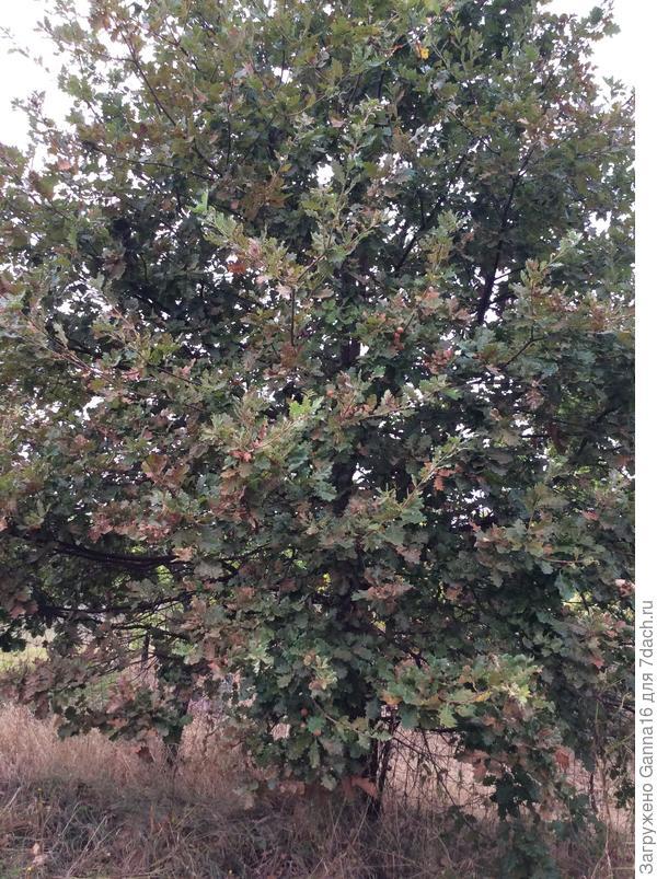 Экземпляр 1, дерево целиком.