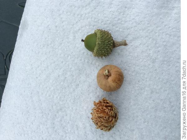 С верху в низ: экземпляр2, экземпляр1 ( плод и не знаю что, тоже растёт на ветках)