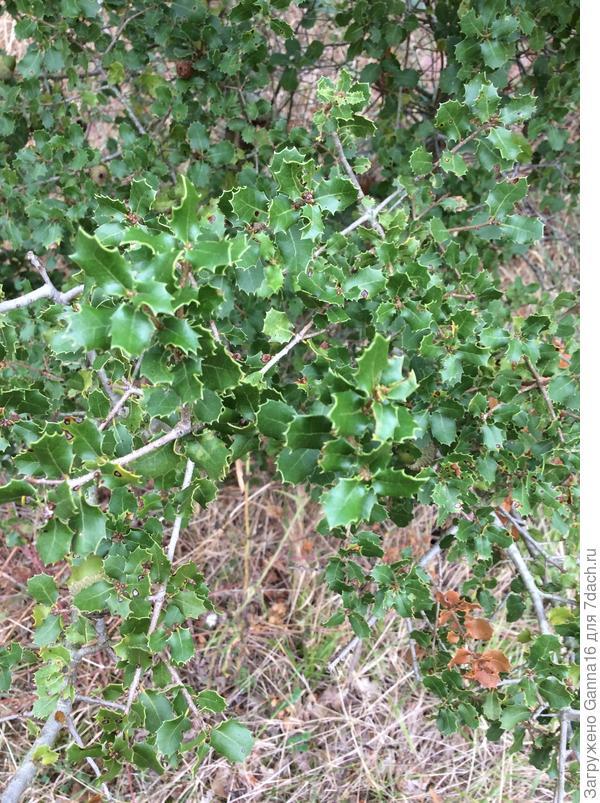Экземпляр2, листья.