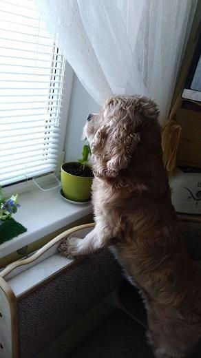 Приехав домой Бафф с тоской встал у окна,