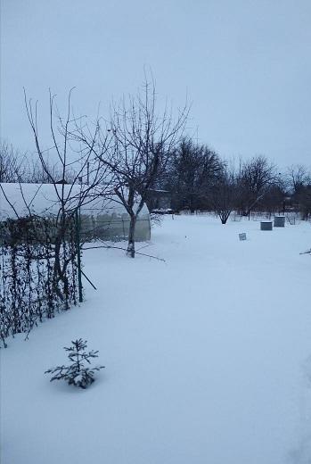 Снег,снег кругом.