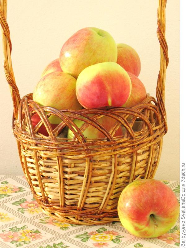 яблочки Мелбы