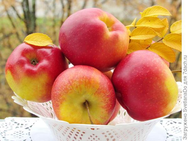 яблочки наливные