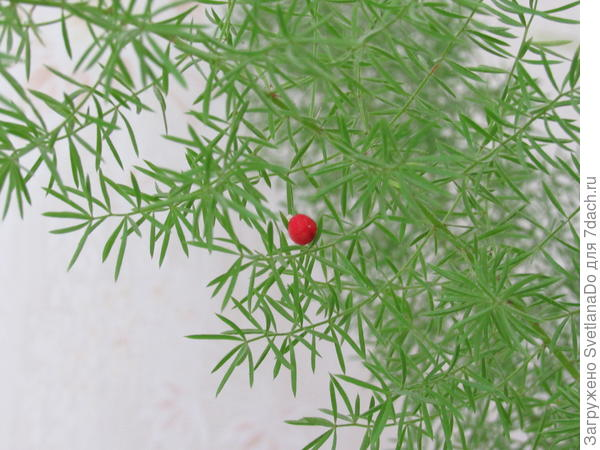 плодик с семенами