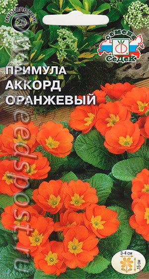 """Примула """"Акконд оранжевый"""""""