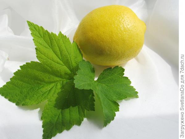 лимон и смородиновый лист