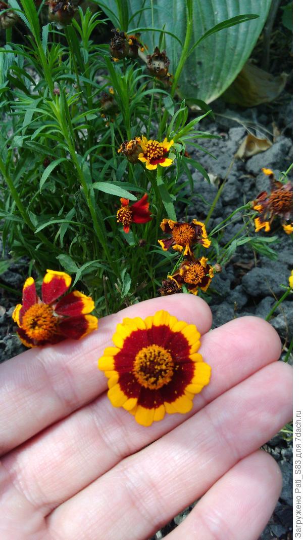 Подскажите пожалуйста, как называется этот цветок?