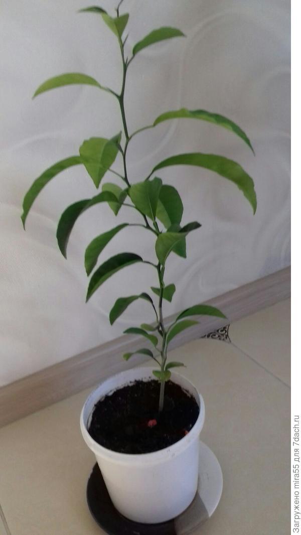 экзотическое растение для  определения  названия