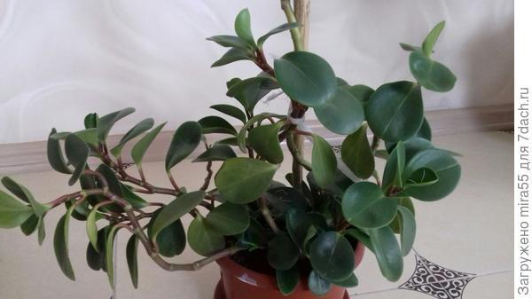 Название растения и выращивание!