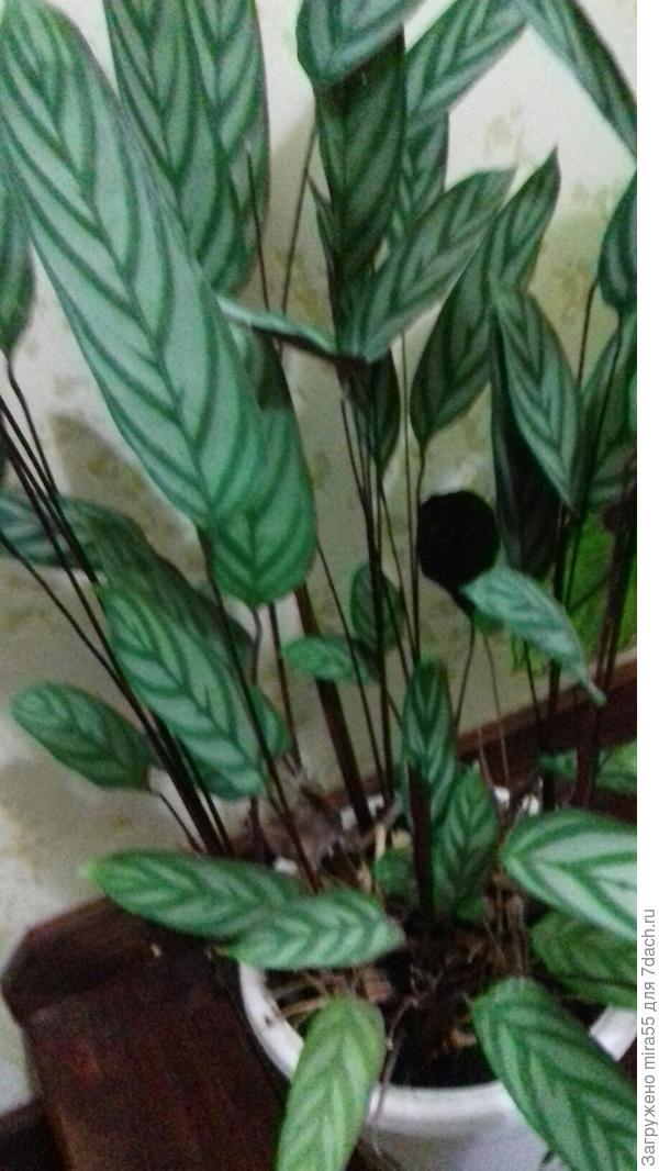 комнатное растение  неизвестное...