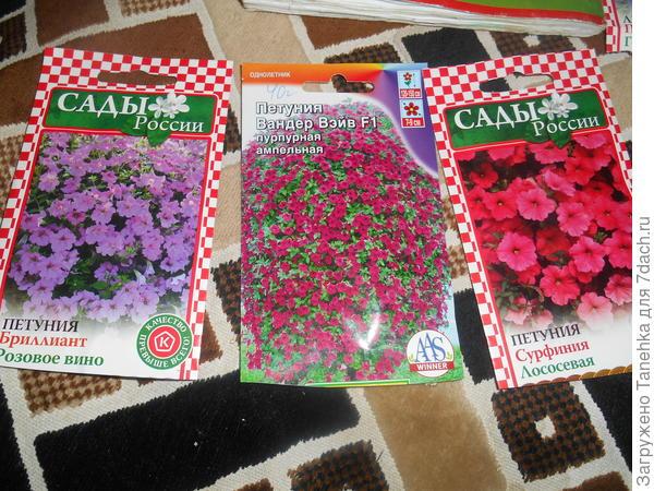 В этом году ампельные петунии все в розовом цвете