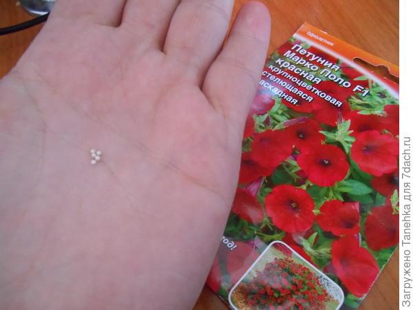 Нужное количество семян высыпаю на ладонь