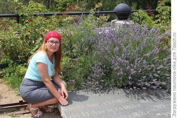 Великолепный куст лаванды на мемориальном кладбище города Севастополь