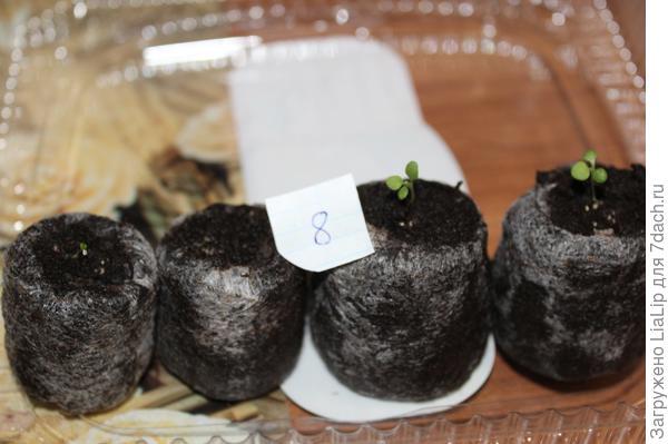 Растения развиваются неравномерно